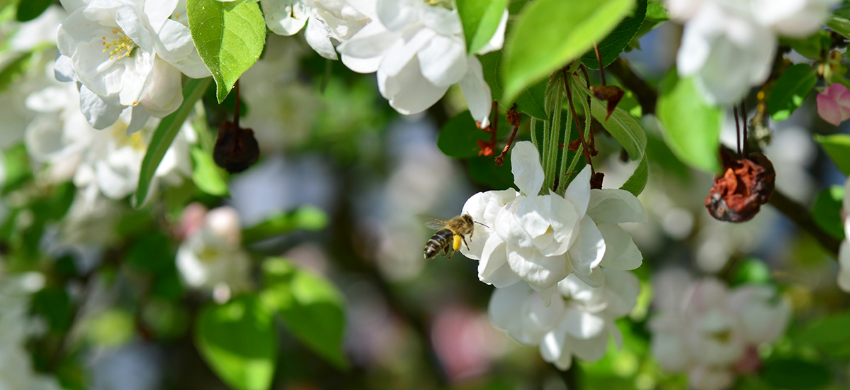 2019 08 27 news Bienen - Bees are swarming for STORZ MEDICAL