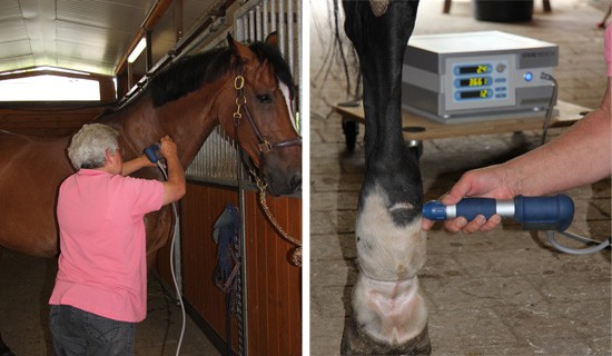 Physiotherapy on the paddock and in equestrian sport stables: shock waves get equine athletes into shape for top performance